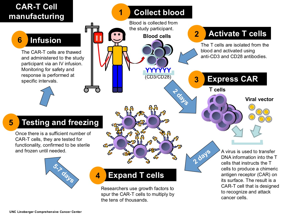 The phases of developing and preparing chimeric antigen receptor T cells, or CAR-T cells.